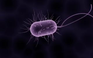 Skuteczna odbudowa flory bakteryjnej